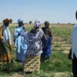 Femmes dans un champ à Matam